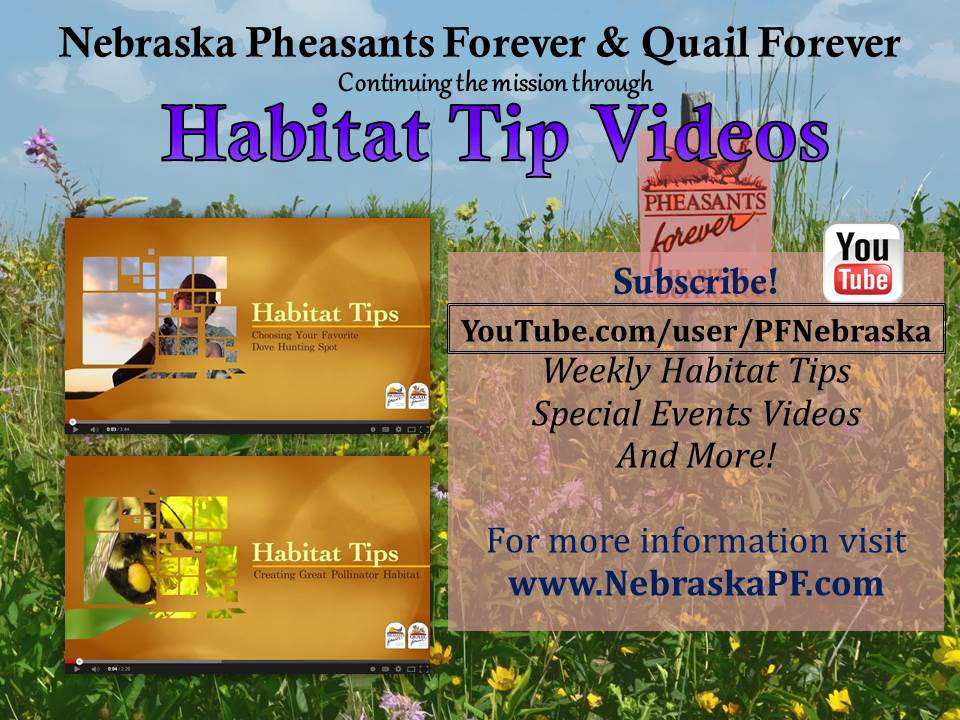 Habitat Tip Flyer