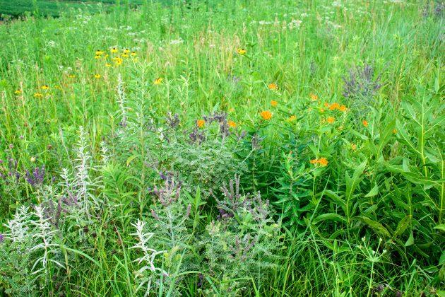 Grass Seed Program