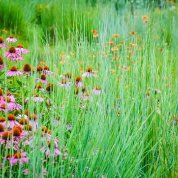 Grass/Wildflower Seed Mixes