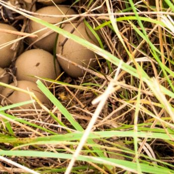 Nesting Cover