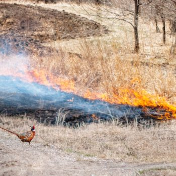 Prescribed Fire Basic Workshop