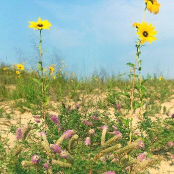 Sandhills Seed Mixes
